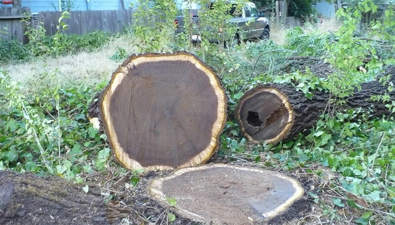 gỗ óc chó xẻ dạng tròn