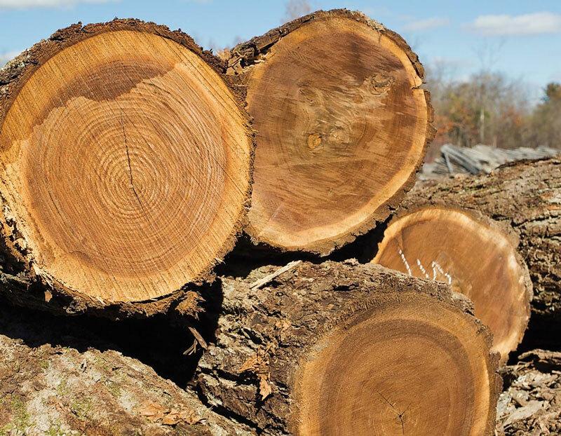 điều kiện khắt khe của gỗ óc chó