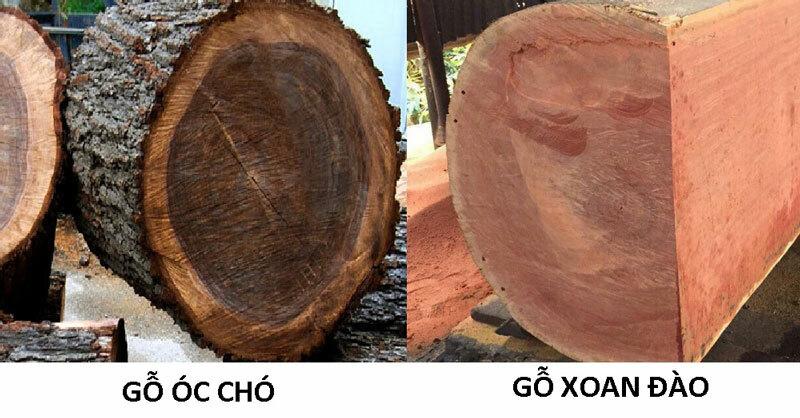 gỗ óc chó và gỗ xoan đào
