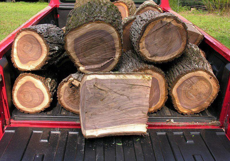 gỗ óc chó bắc mỹ